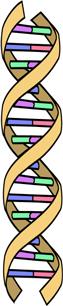 Line drawing of DNA molecule